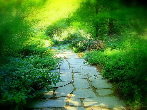 inteligencia emocional- Foto de camino de piedras